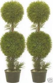 two 3 foot artificial cypress cedar topiary trees