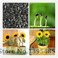 534 best garden supplies images on pinterest garden supplies