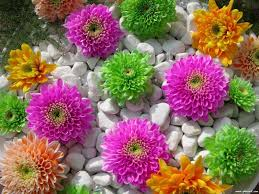 Flower Wallpaper Rose Flowers Wallpaper Pictures Of Flowers For Wallpaper See