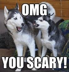 Funny Husky Memes - top 35 most funniest animal memes finest 10 ideas