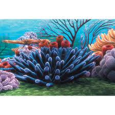 penn plax finding nemo coral reef 20 gal background hayneedle
