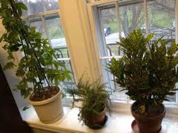 Winter Indoor Garden - indoor gardening for health in winter turn to houseplants your