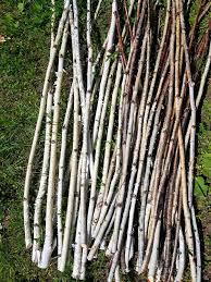 20 White Birch Branches Birch sticks Birch Log Craft Supply