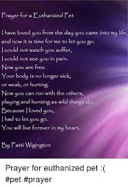 pet prayer prayer for a euthanized pet l loved you from the day you came