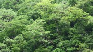 canopy amazon canopy of the amazon rainforest 2 stock footage video 2561456