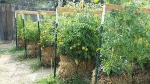 straw bale gardening instructions and how it works countryside