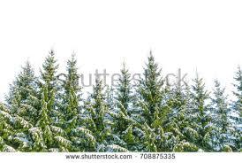 row christmas pine trees isolated on stock photo 319299212