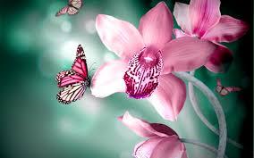 butterflies flower hd wallpaper animals wallpapers