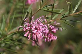 Native Plants In The Tropical Rainforest Choosing Native Plants Birds In Backyards