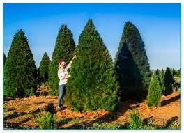 seasonal concepts trees