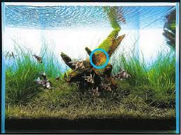 Takashi Amano Aquascaping Techniques Layout Critique 15 Takashi Amano Aquascaping Aquatic Plant
