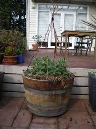wine barrel gardens prices the instant veggie garden