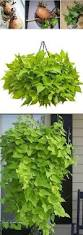 Tropical Plants Images - 57 best tropical plants images on pinterest gardening plants