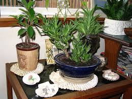 Home Decorating Plants Plants