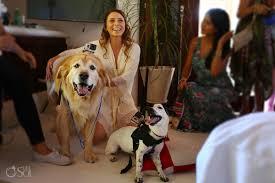 esencia beach wedding video dog ruff ers