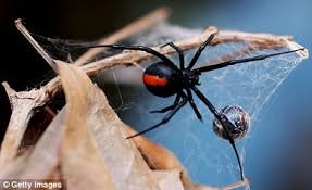 Are Spiders Attracted To Light The Shape Of Fear Why Spiders Scare Us So Much Humans Are