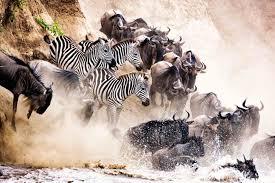 wildlife photography africa travel aerial photographer wild