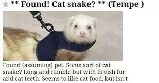 Ferret Meme - found cat snake weknowmemes