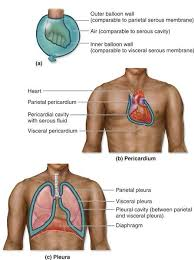 Human Anatomy Terminology 37 Best Anatomy Introduction Images On Pinterest Medical