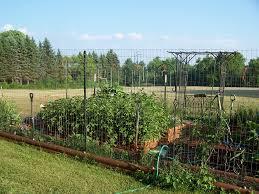 vegetable garden fence ideas garden deer fence gardens and landscapings decoration