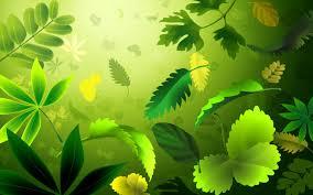 best ideas about leaves wallpaper on pinterest palm hd