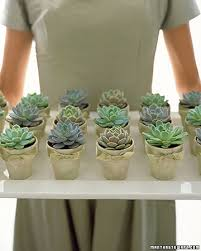 succulent wedding favors diy green wedding favor chic adorable potted succulents or cacti