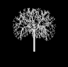 file l system tree07 jpg wikimedia commons