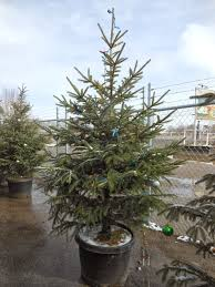 trees that nursery why not plant a living tree
