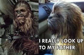 Chewbacca Memes - this dog actually looks like chewbacca boombotix skullyblog
