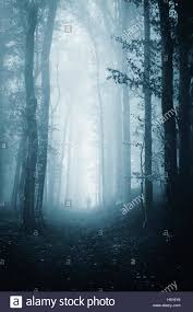 scary halloween photos free dark forest path scary halloween night atmosphere background