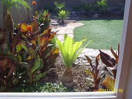 Backyard Plant Ideas Tropical Plants For Backyard Rolitz