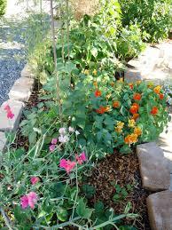 Urban Gardening Tips Urban Artichoke July 2011
