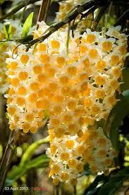 437 best flowers garden images on pinterest flowers flowers