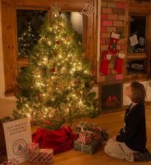 christmas tree festival akron ohio christmas lights decoration