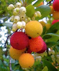seattle landscape ornamental fruits