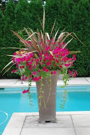 Plants And Planters by Best 25 Container Flowers Ideas On Pinterest Container Plants