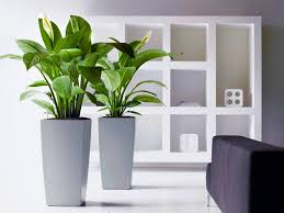 top office desk plants decoration ideas collection lovely in