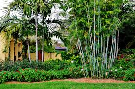 florida landscaping ideas for front of house florida landscape