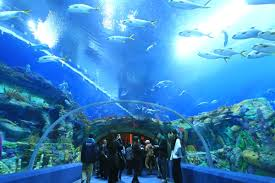 chimelong ocean kingdom world u0027s largest aquarium opens in china