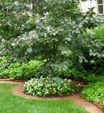 landscaping ideas around trees pictures design ideas u0026 decors