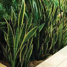 Combattere l'inquinamento domestico con le piante Images?q=tbn:ANd9GcT_2e1TLiuLT1wNA4cKNY5pFS7Xf-WtQzGKcNsEperRPsgh5q7cXw
