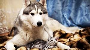 Wallpaper Dog Dog And Cat Wallpaper 41 Widescreen Hd Quality Wallpapers Of Dog