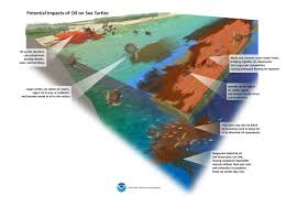 How How Do Oil Spills Affect Sea Turtles Response Restoration Noaa Gov