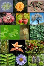 importance of native plants plant wikipedia