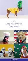 113 best halloween pet costumes images on pinterest animals pet