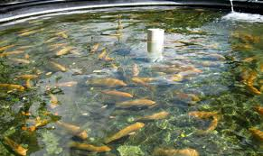 fish the new factory farmed animals one green planet