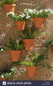 wall with flower pots with white petunia and ornamental asparagus