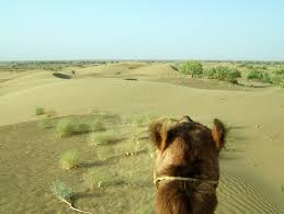 thar desert location asisbiz travel photo alblum of camel safari thar desert