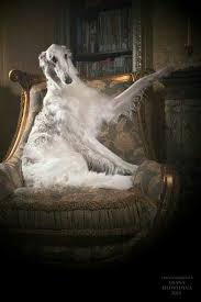 The Armchair Universe Borzoi Sitting In The Armchair Like A Real Aristocrat Animals