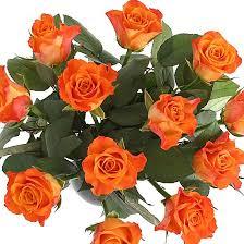 orange roses a dozen orange roses giftwrap delivered next day